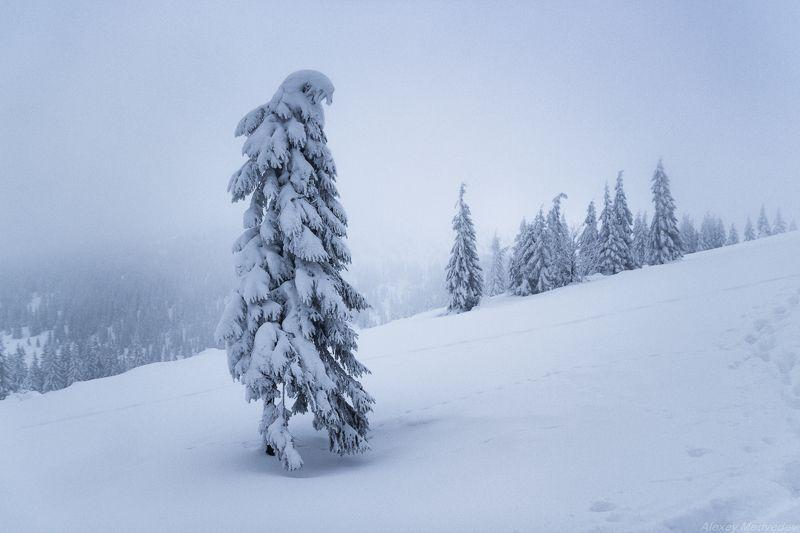 Карпаты, Украина, зима, горганы Стойкостьphoto preview