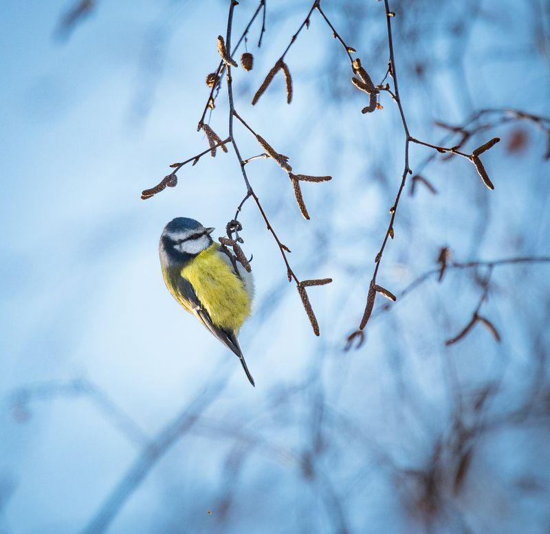 Утренний зимний этюдphoto preview