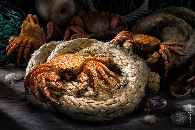 rustic, food, crab CRABphoto preview