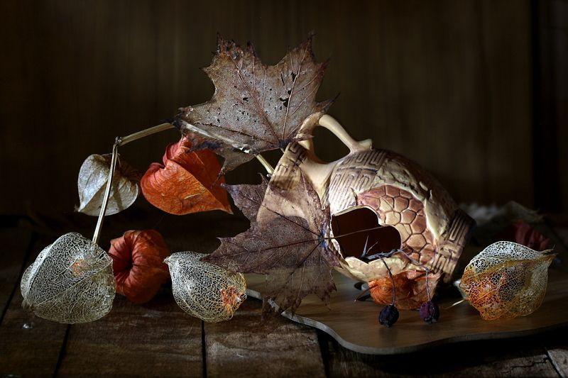 натюрморт, кувшин, физалис, листья Кувшинчикphoto preview