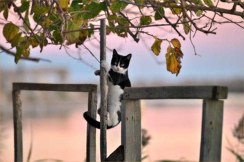 кошки, животные, портрет, закат Акробатphoto preview