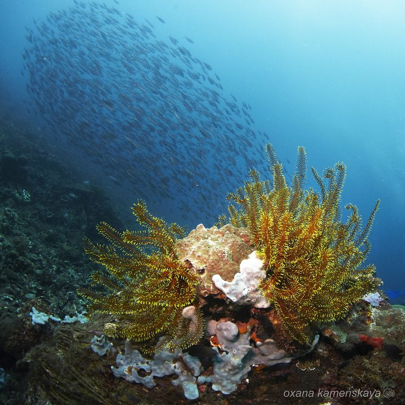 underwater phillipines blue deep diver reef Подводная открыткаphoto preview