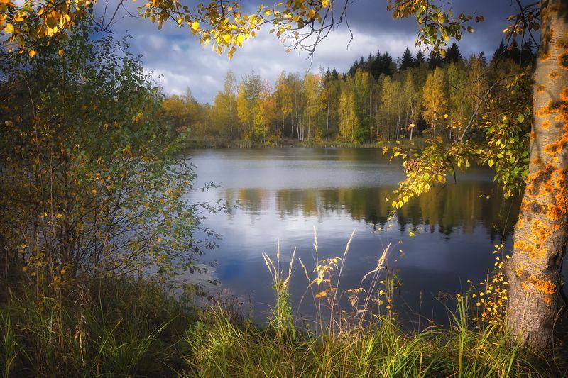 лес, природа, пейзаж, осень, река, вода, ручей, подмосковье Когда лето переходит в осень...photo preview