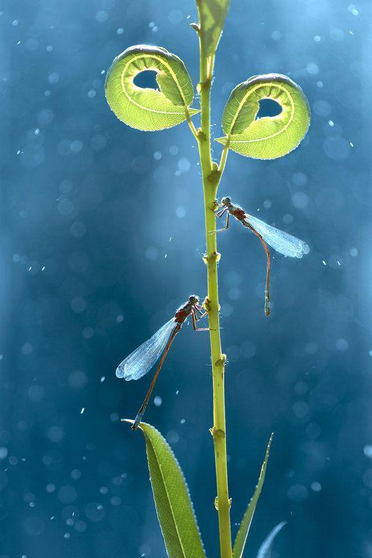 Макро, природа, стрекоза, стрекозы, боке photo preview