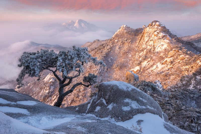 top of a mountain, Bukhansan, mountains, winter, pine Pine Tree of Dobongsanphoto preview