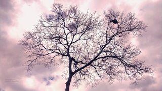 The Naked Tree
