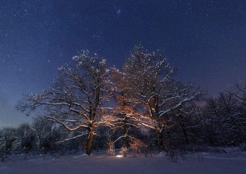 ночь, звезды, лес, снег, зима Вдвоём под звёздамиphoto preview