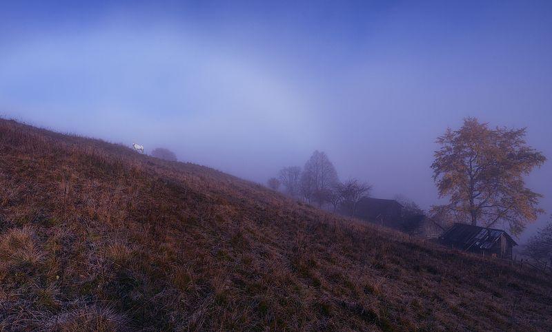 утро, туман, лошадь, луг Лугphoto preview