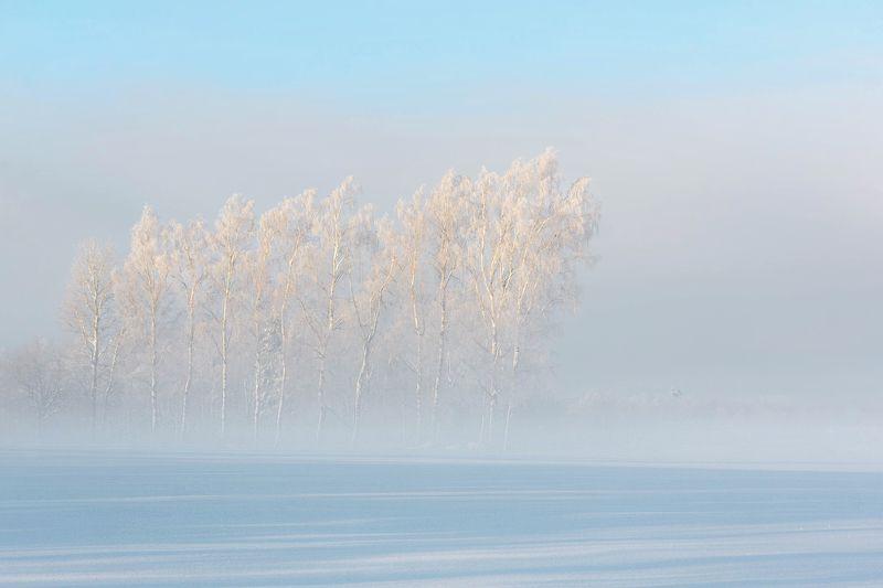 зима, лес, туман Зимний кайфphoto preview