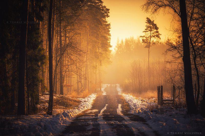 forest, poland, polish, landscape, sunrise, sunset, mood, musing, loneliness, beautiful, amazing, awesome, adventure, explore, travel, light Temple of musing фото превью