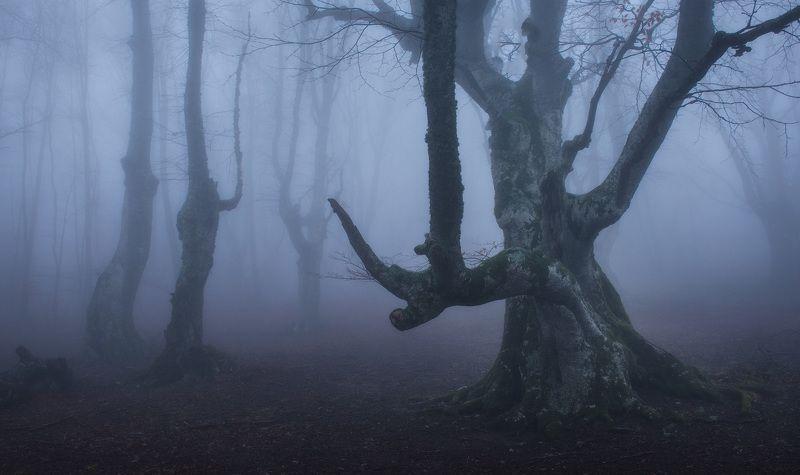 крым, туман, буковый лес, горы, путешествия, туманный лес, фототур, фототур по крыму, туры по крыму, весна в крыму, февраль в крыму Буки-колдуныphoto preview