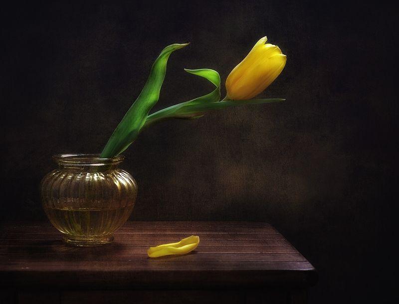 натюрморт,тюльпан,цветы с желтым тюльпаном...photo preview