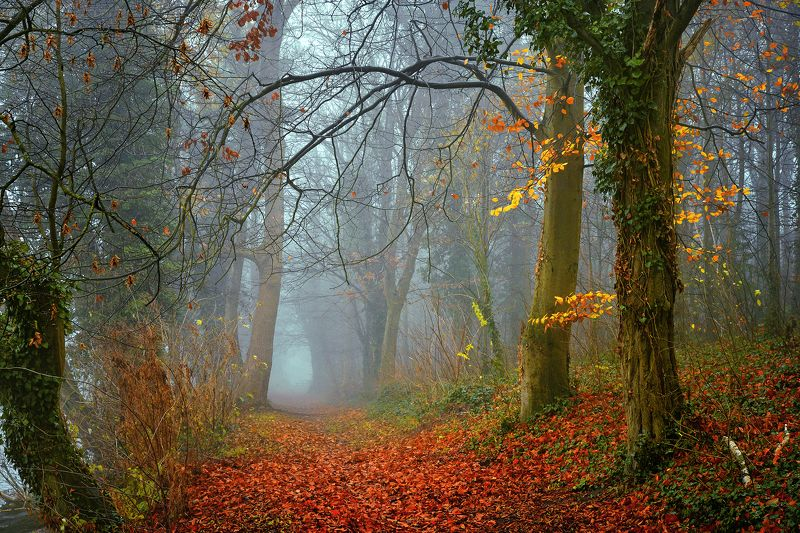 осенняя аллея autumn alley dranikowski path road mist magic trees foggy colours d610 fall осенняя аллеяphoto preview