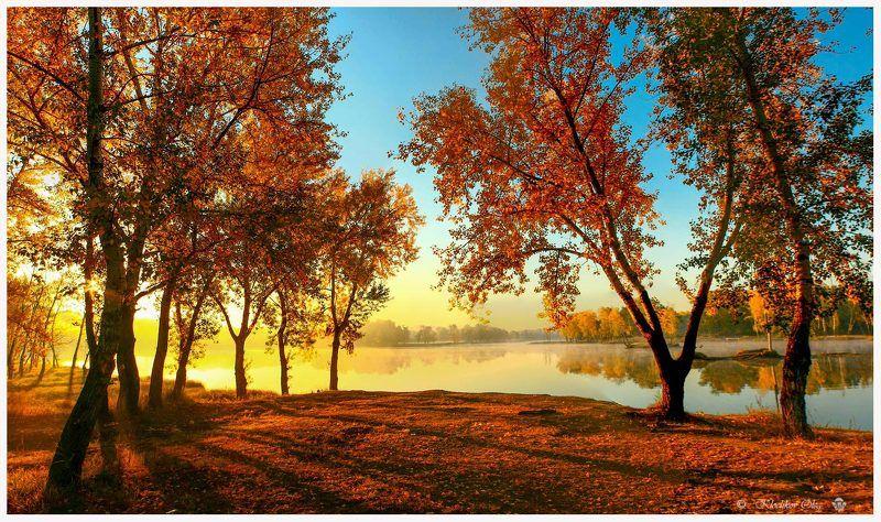осень,золото,листва,утро,туман,абакан Влюблен в тебя я, осень золотая.photo preview