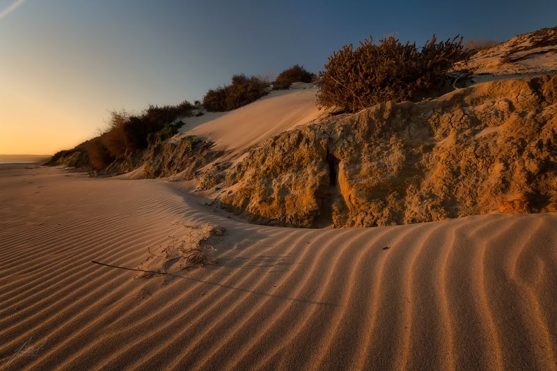 Прибрежные дюныphoto preview
