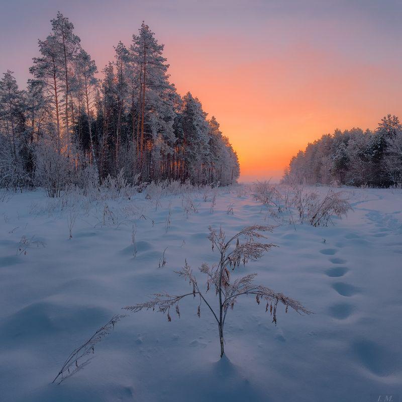 зима, снег, мороз, утро, иней, лес, сосны, рассвет, пейзаж, морозное утро, дымка, туман, winter, morning, sunrise, forest, snow, misty, frost, edge, landscape, pine trees, foggy Зимнее утро на опушке лесаphoto preview