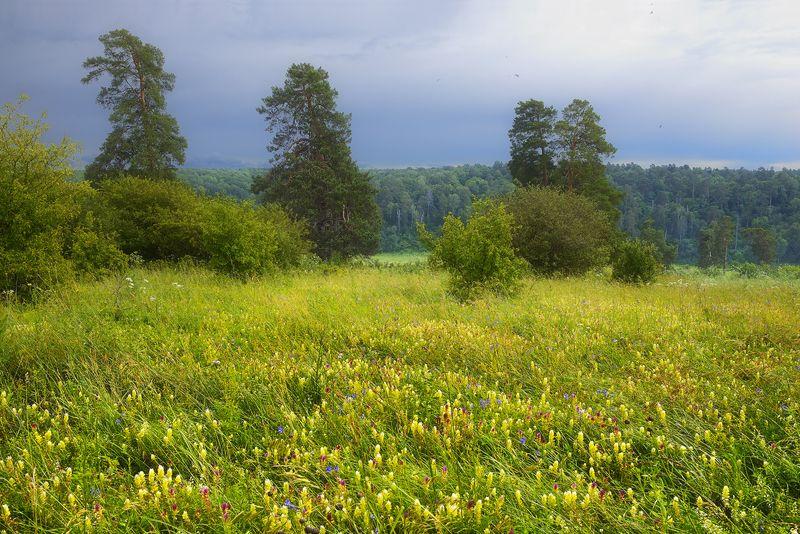 Цветущий луг,photo preview