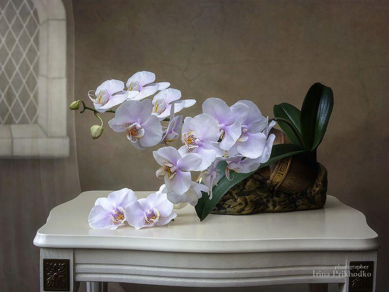 натюрморт, орхидея, фаленопсис, цветочный художественное фото, интерьер, винтажный Натюрморт с орхидеей фаленопсисphoto preview