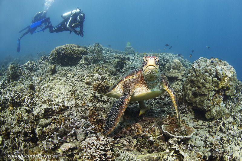 underwater phillipines blue deep diver turtle  Кто здесь?photo preview
