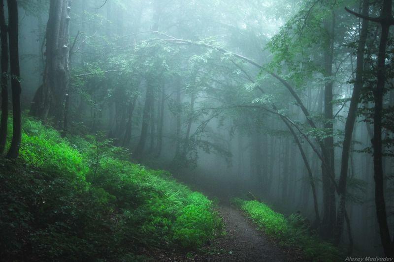 Карпаты, Украина, Боржава, лес, дождь Арочки дождливые карпатскиеphoto preview