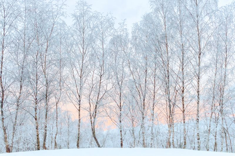 landscape, winter, curonian spit, sunrise, frost The winter talephoto preview