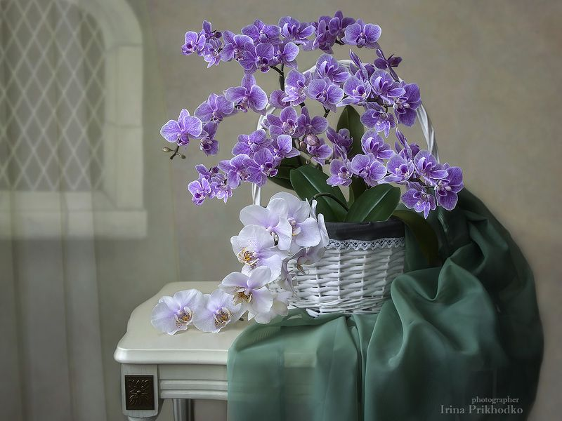 натюрморт, орхидеи, корзина, флористика, интерьер, цветочный Натюрморт с орхидеямиphoto preview