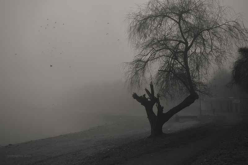 Туманная меланхолияphoto preview