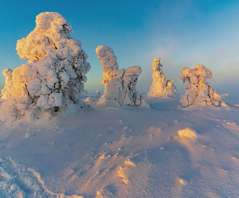 лапландия, Финляндия, пейзаж, природа, tykky, закат Снежные фигуры в парке Riisitunturi -1.photo preview