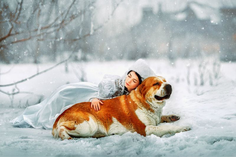 art  fabulous  winter fairy tale  girl and dog  white  red  ferudush  snow  winter  fantasy ***photo preview