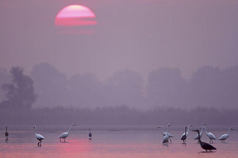 heron, czapla, wildlife, birds, photo preview