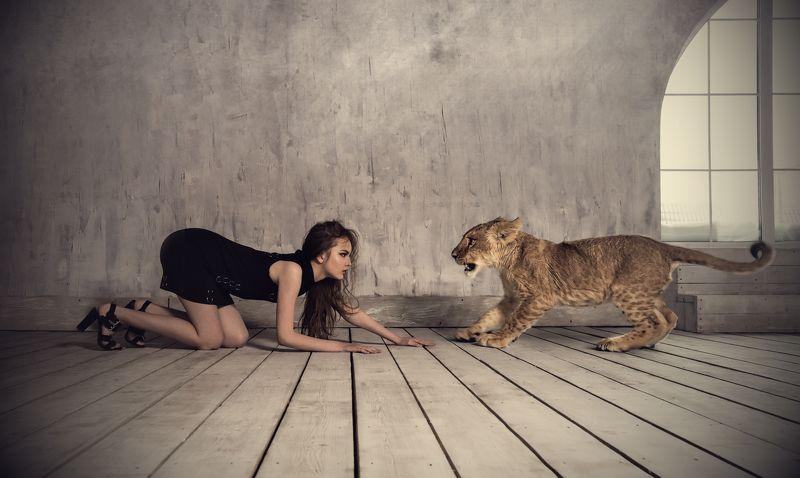 портрет, девушка, модель, студия, fashion, portrait, model, girl, photomodel, studio, lion, львёнок, лев Кто испугается первый ?photo preview