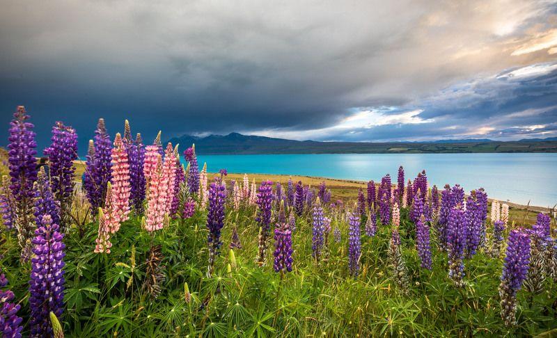 Южный остров, Новая Зеландияphoto preview