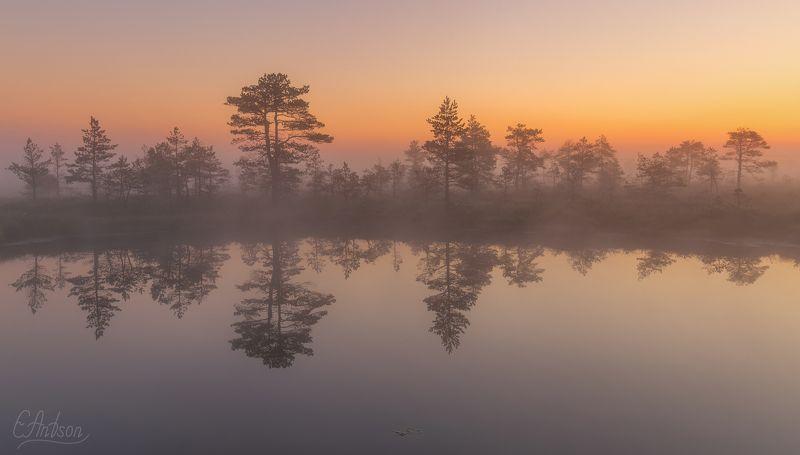 туман, природа, пейзаж, лето, болото, вода, отражение, эстония Очарование болотphoto preview