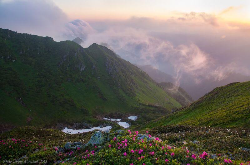 пейзаж, природа, лес, горы лето, туман, утро, путешествие, трекинг, тропа, июнь, камни, украина, карпаты Рододендронphoto preview