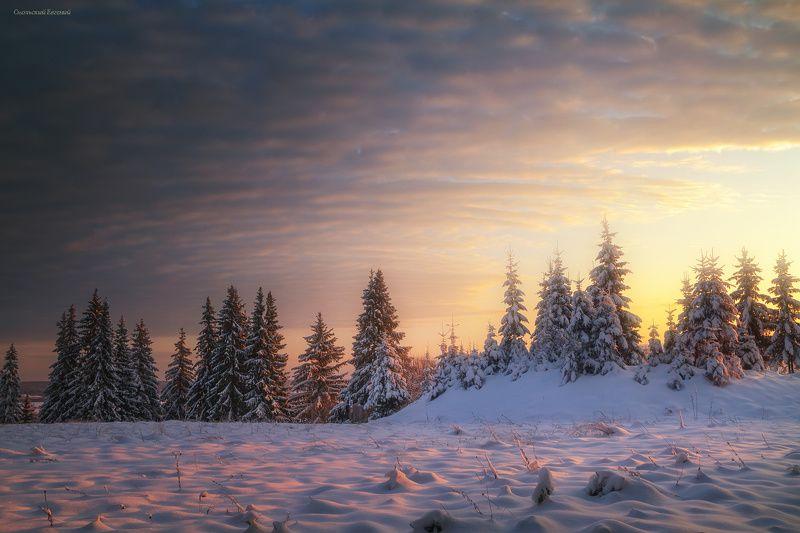 зима, закат, лес, холм, мороз, снег, вечер, ель Зимная полянаphoto preview