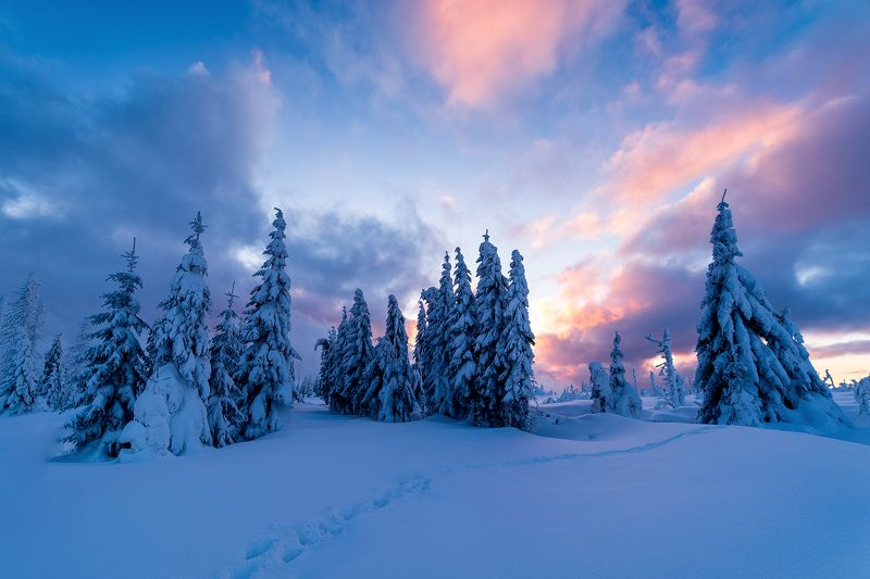 winter,sunrise,sunset,nature,sky,clouds,snow,snowy,frozen,frosty,trees,way,czech,landscape,scene Frozen sunrisephoto preview