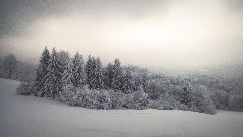 снег, склон, лес, косогор, зима Зима на косогоре.photo preview