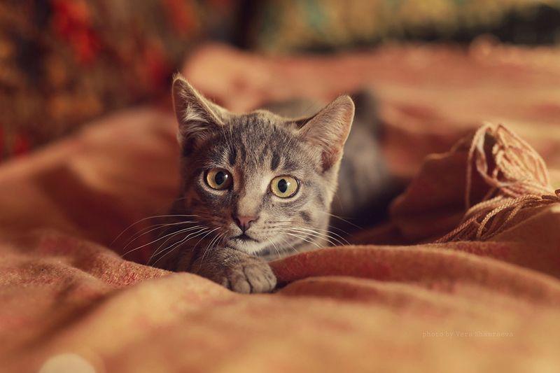 игривый котик Кто здесь?))))photo preview