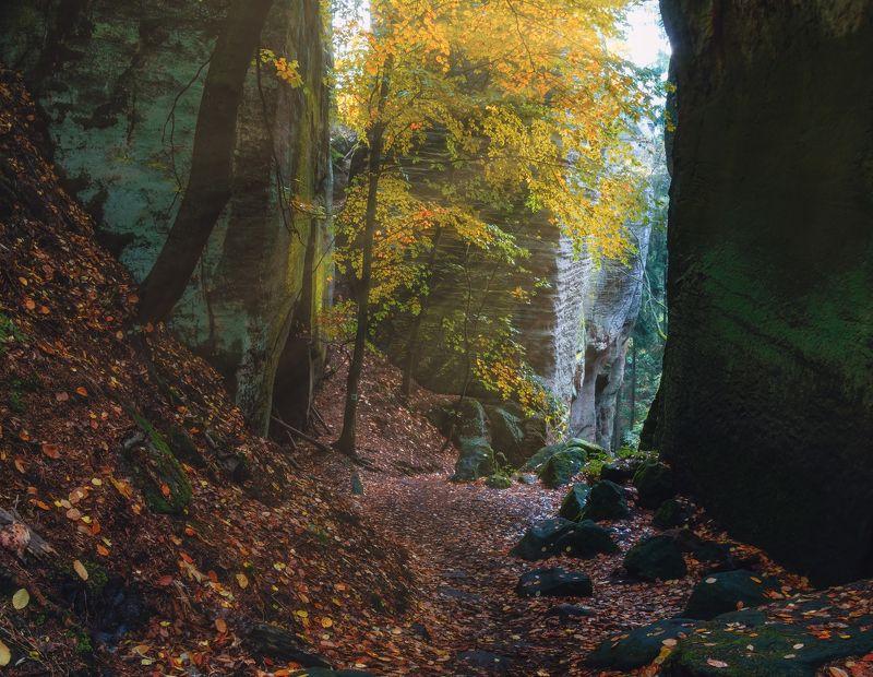 Утро Лес туман листва Чехия осень пейзажи природа скалы путешествия деревья камни солнце Утро в туманном лесуphoto preview