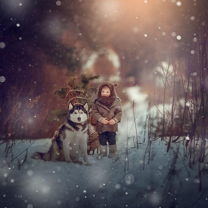 мальчик, лес, хаски, зима, мороз, дети, санки Однажды в лесу...photo preview
