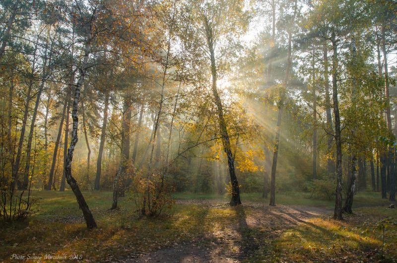 пейзаж, лес, осень, красиво, октябрь, солнце, листья, деревья, лучи, туман Утро, солнце, октябрьphoto preview