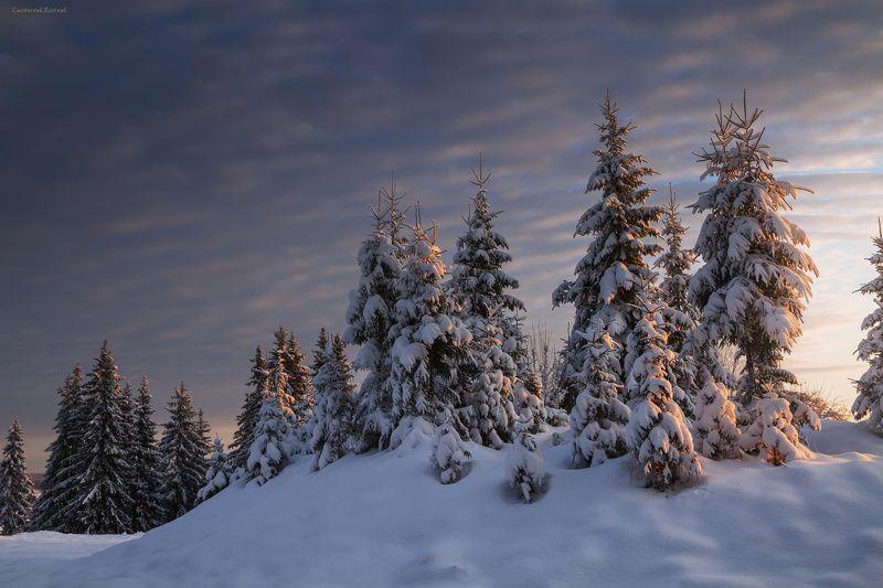зима, закат, лес, холм, мороз, снег, вечер, ель Зимний лесphoto preview