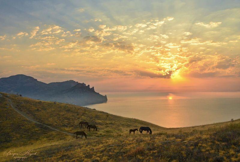 крым, кара-даг, утро, рассвет, море, лучи, лошади Кара-Даг в утреннем маревеphoto preview