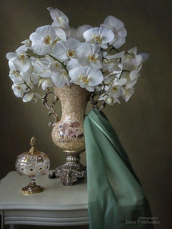 натюрморт, орхидеи, флористика, букет, цветочный Натюрморт с белыми орхидеями в винтажной вазеphoto preview