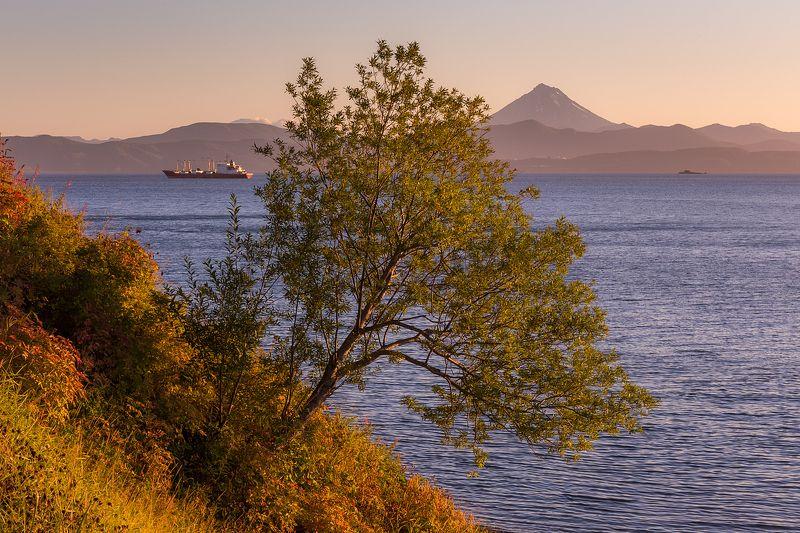 камчатка, тихий океан, авачинская бухта, петропавловск-камчатский На склонеphoto preview