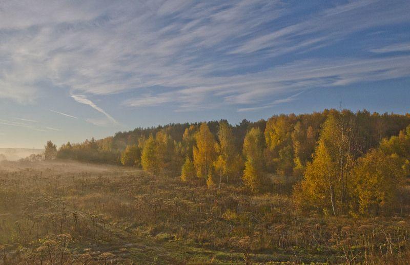 пейзаж, природа, осень, лес, архангельское Осень в лесах Архангельскогоphoto preview
