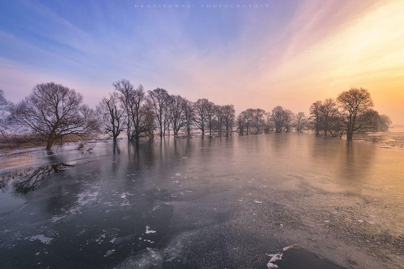 nationalpark unteres odertal ice water trees winter dranikowski morning cold odra river sky Nationalpark Unteres Odertalphoto preview