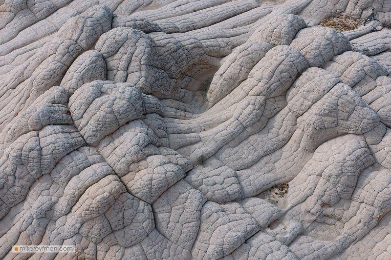 white pocket, arizona, texture, bones, unusual, spooky, us southwest Кости Белого Карманаphoto preview