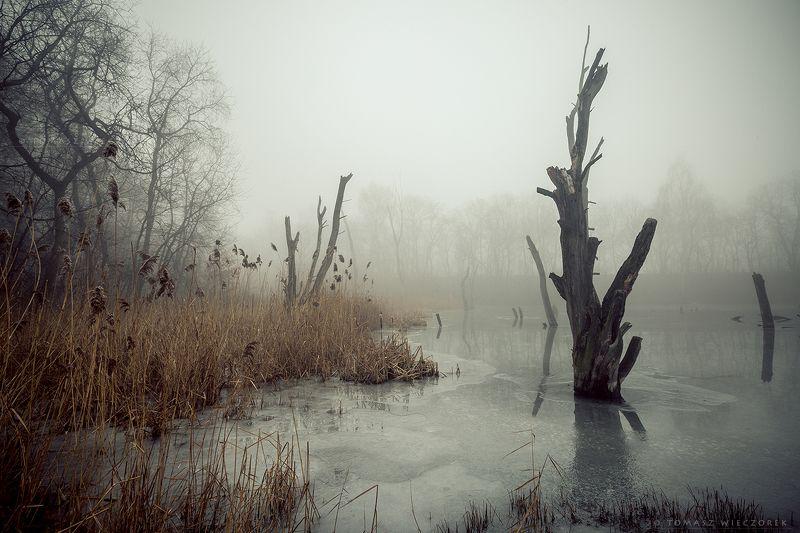 poland, polish, landscape, trees, light, awesome, shadows, fog, mist, beautiful, thaw, pond, lake, winter, reflection Thaw фото превью