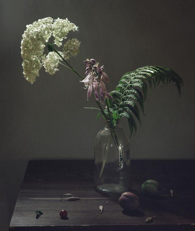 слива, цветы, гортензия, папоротник с неспелыми сливамиphoto preview